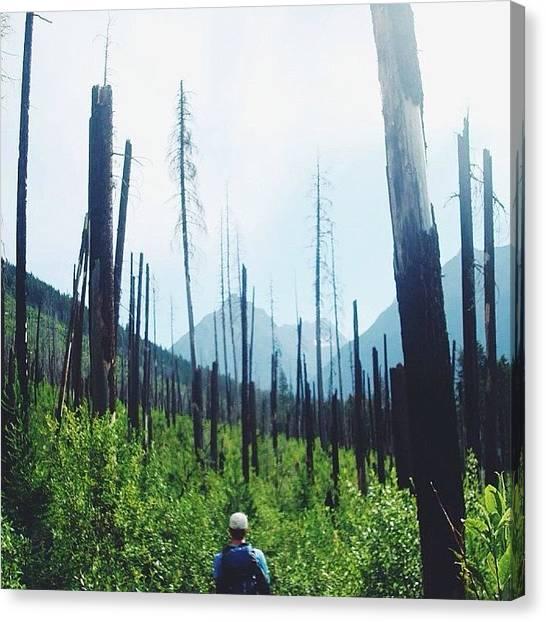 Glacier National Park Canvas Print - Burned Life by David Holtz