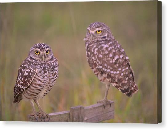 Owls Canvas Print - Burrowing Ground Owls by Doug Grey