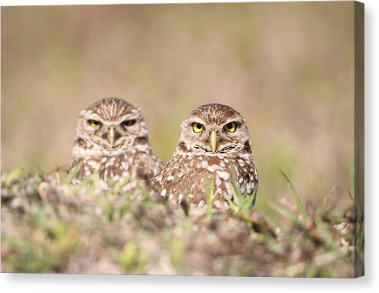 Burrowing Owl Pair Canvas Print