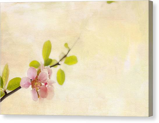 Blossom Canvas Print - Bursting Out by Rebecca Cozart