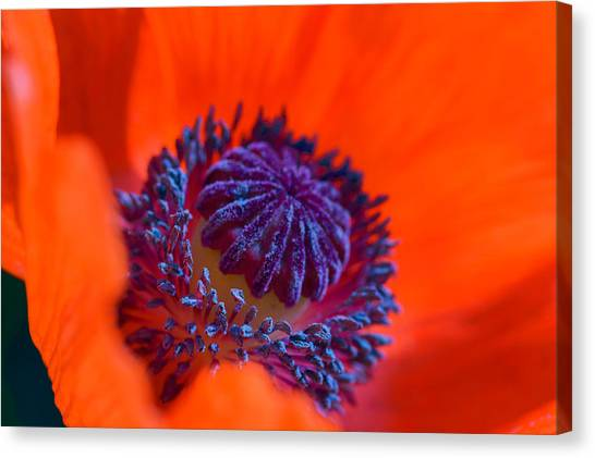 Canvas Print featuring the photograph Bursting With Colour by Garvin Hunter