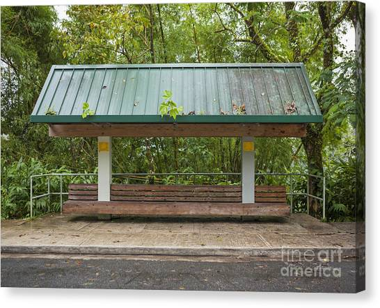 Bus Stop Bench In The Rainforest  Canvas Print