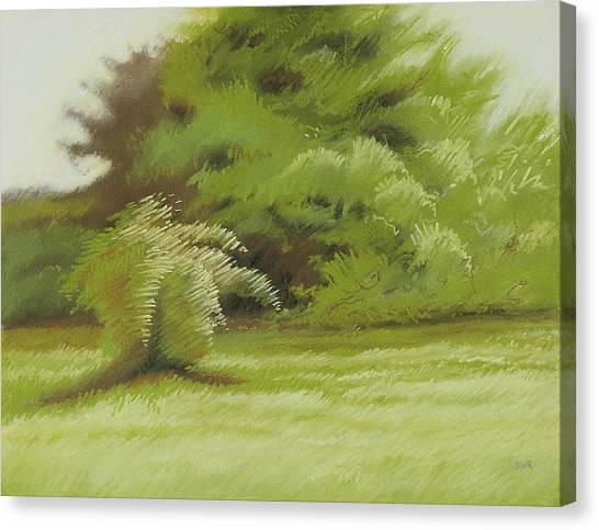 Bush And Brush Canvas Print by Bruce Richardson