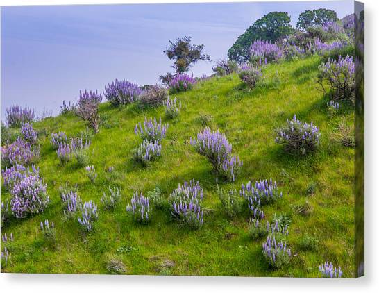 Contra Canvas Print - Bush Lupine by Marc Crumpler