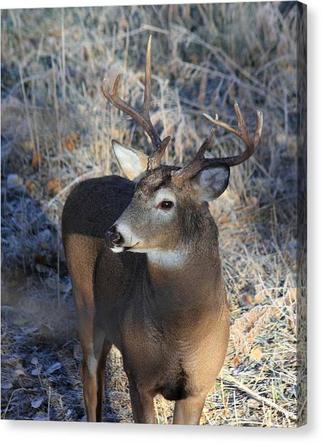 Busted Antlers Canvas Print
