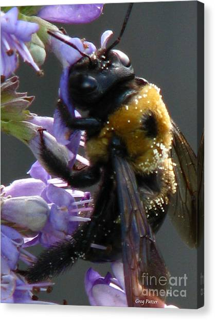 Busy Bee Canvas Print by Greg Patzer