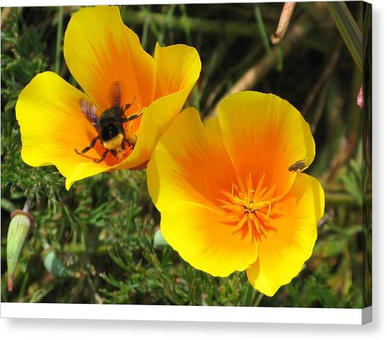 Busy Bee Canvas Print by Jill Bell