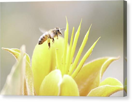 Busy Bee Canvas Print by Luna Curran