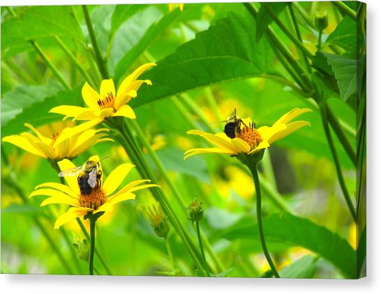 Busy Bees Canvas Print by Andrea Dale