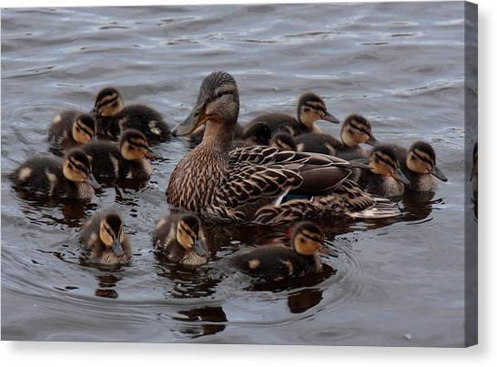 Busy Mum Canvas Print by Peter Skelton
