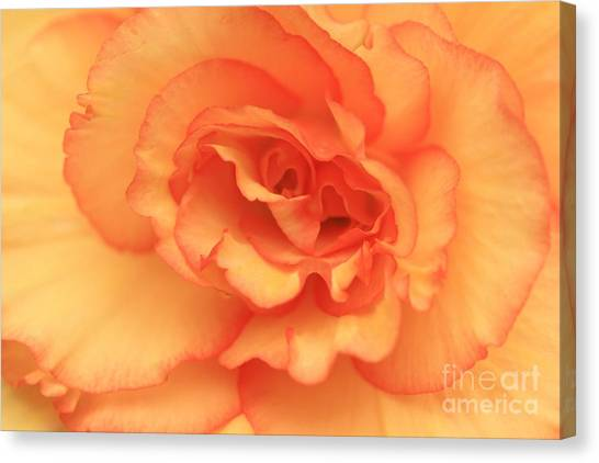 Butter Cup All Profits Go To Hospice Of The Calumet Area Canvas Print