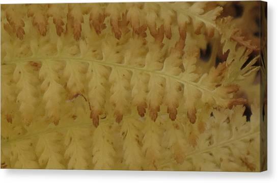 Butter Ferns Canvas Print