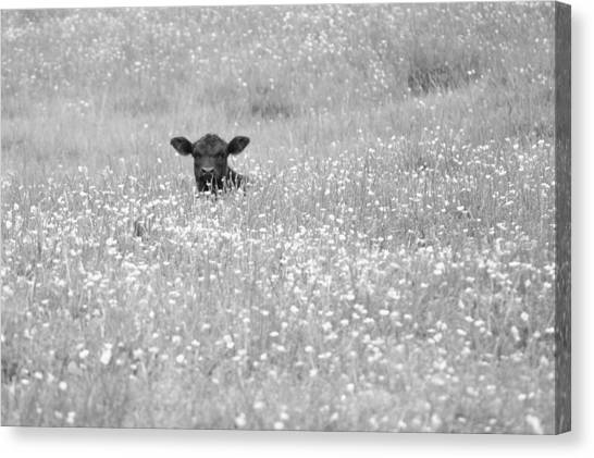 Buttercup In Black-and-white Canvas Print