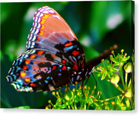 Butterfly 2 Canvas Print