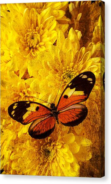 Pom-pom Canvas Print - Butterfly Abstract by Garry Gay