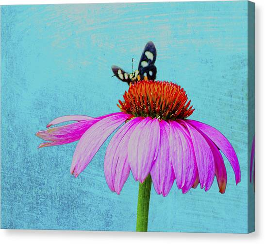 Butterfly And Coneflower On Turquoise Canvas Print by Dan Holland