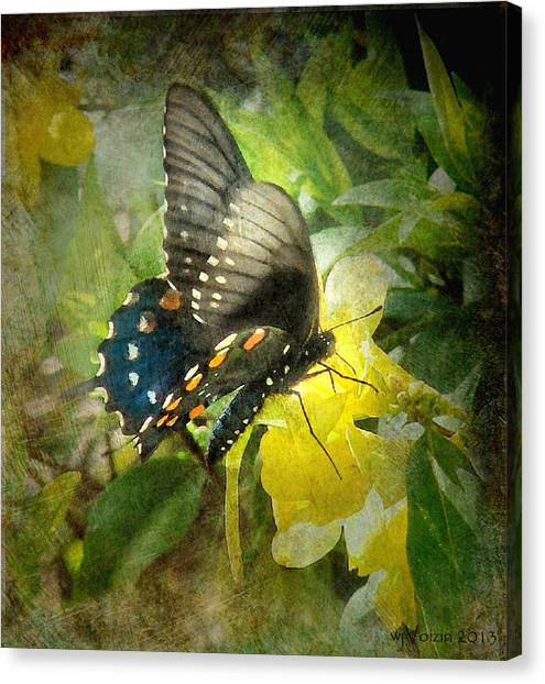 Butterfly And Jasmine Canvas Print