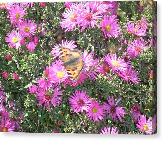 Butterfly And Pink Flowers Canvas Print