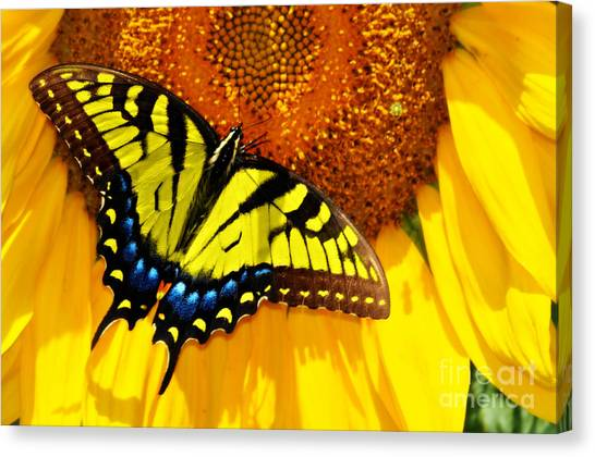 Butterfly And The Sunflower Canvas Print