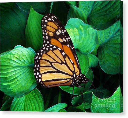 Butterfly Be Still Canvas Print