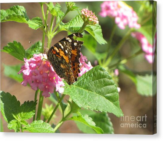 Butterfly Bloom Canvas Print by Gayle Melges