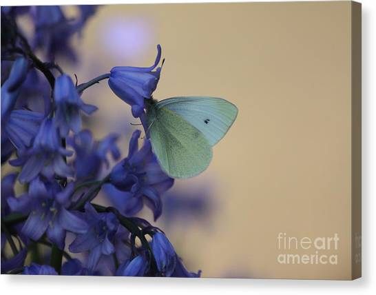 Butterfly Bounty Canvas Print
