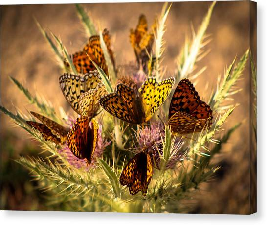 Butterfly Bouquet Canvas Print
