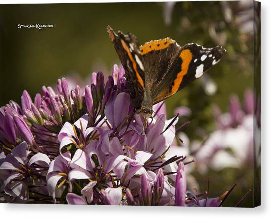 Canvas Print featuring the photograph Butterfly Close Up by Stwayne Keubrick
