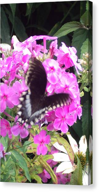 Butterfly Canvas Print by Cynthia Harvey