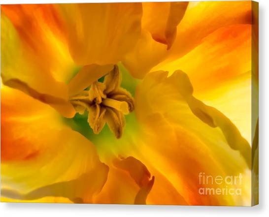 Butterfly Daffodil Springtime Canvas Print