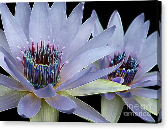 Butterfly Garden 26 - Water Lilies Canvas Print