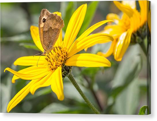 Canvas Print featuring the photograph Butterfly. by Gary Gillette