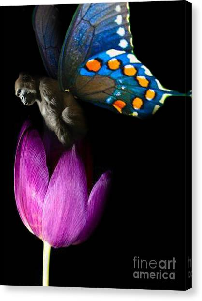 Butterfly-gorilla Canvas Print by Soumya Bouchachi