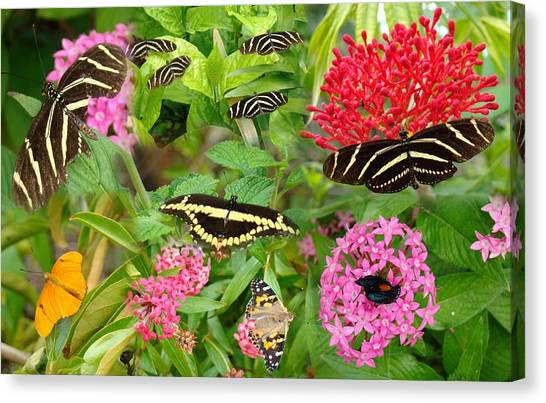 Butterfly High Canvas Print