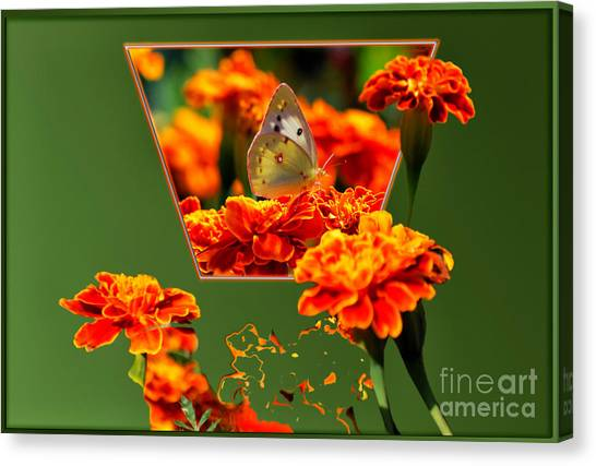 Sulfur Butterfly Canvas Print - Butterfly In A Sea Of Orange Floral 02 by Thomas Woolworth