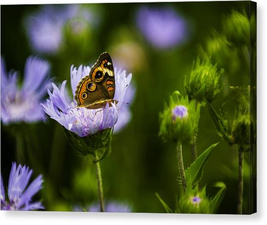 Butterfly In Field Canvas Print