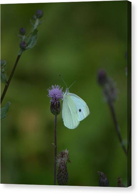 Butterfly In White 2 Canvas Print