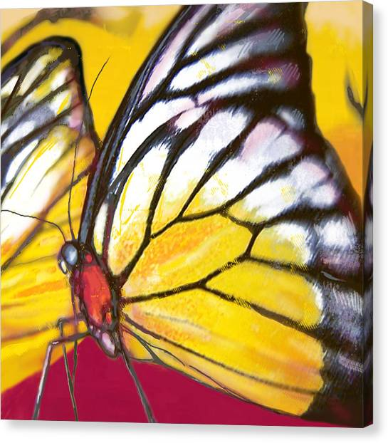 Butterfly - Insect Stylised Pop Art Drawing Potrait Poser Canvas Print by Kim Wang
