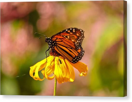 Butterfly Monet Canvas Print