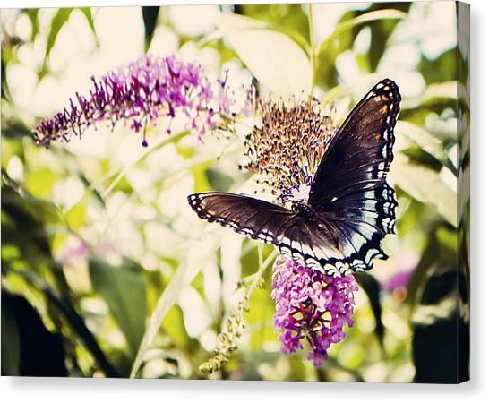 Butterfly On Butterfly Bush Canvas Print