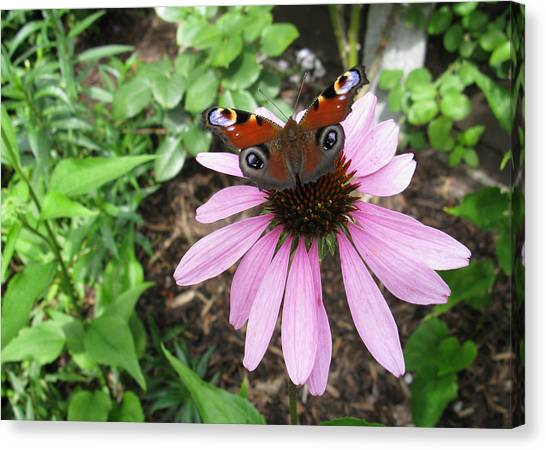 Canvas Print featuring the photograph Butterfly On Echinacea by Helene U Taylor