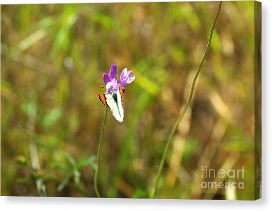 Butterfly On Purple 1.2608 Canvas Print by Stephen Parker