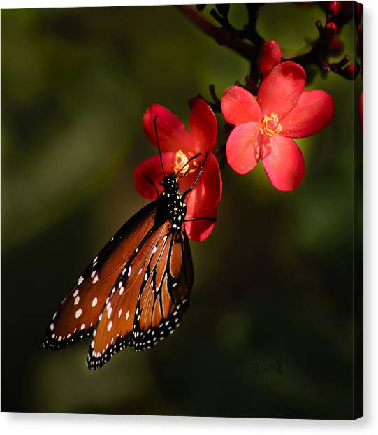 Butterfly On Red Blossom Canvas Print