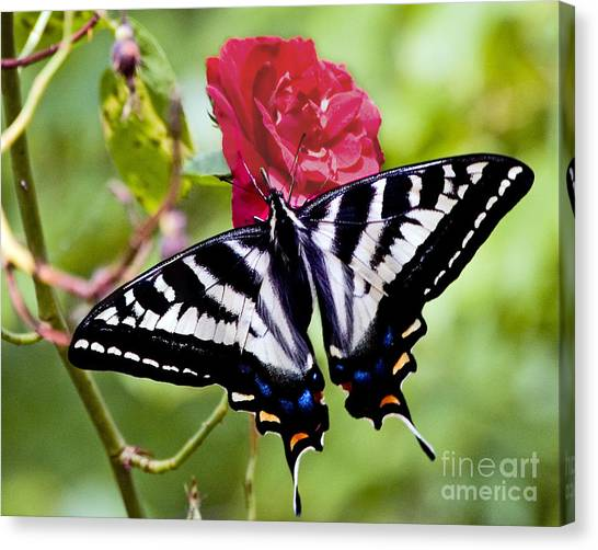Butterfly On Rose Canvas Print