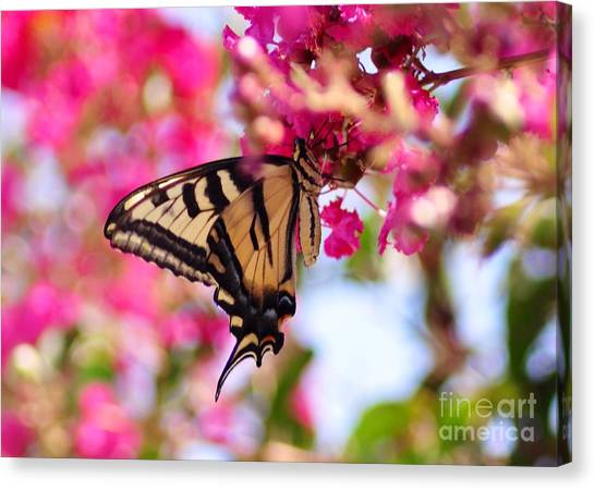 Butterfly On The Crepe Myrtle. Canvas Print