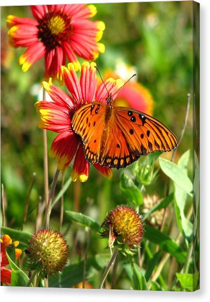 Butterfly One Canvas Print by Peggy Burley