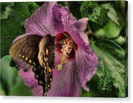 Butterfly Slurpy Canvas Print