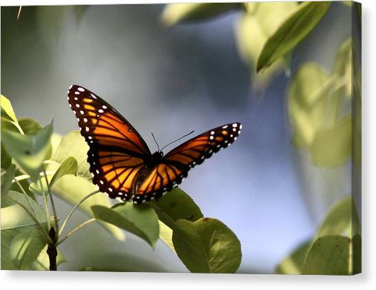 Butterfly -  Soaking Up The Sun Canvas Print