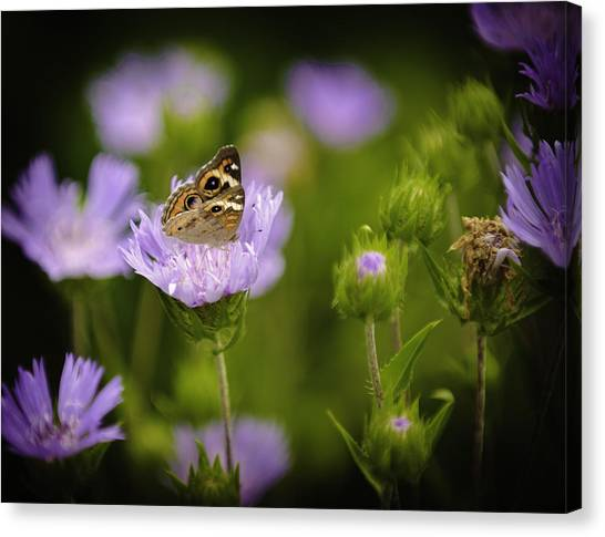 Butterfly Spotlight Canvas Print