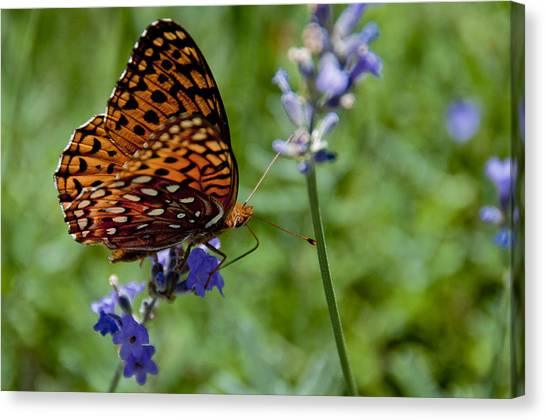 Butterfly Visit Canvas Print